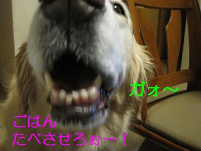 Img_4345_2